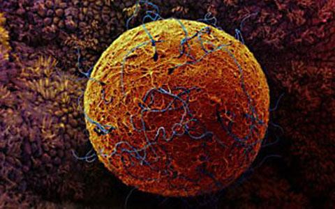 беременность 3 недели фото